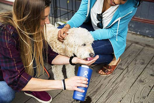 Feed the dog water by Hydro Flask Drinkware